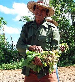 La agricultura hurbana será la primera en recuperarse