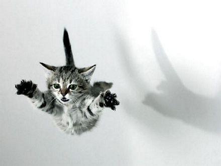 El vuelo del gato